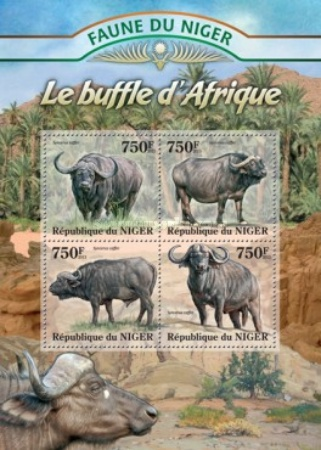 [Fauna of Niger - Buffalo, type ]