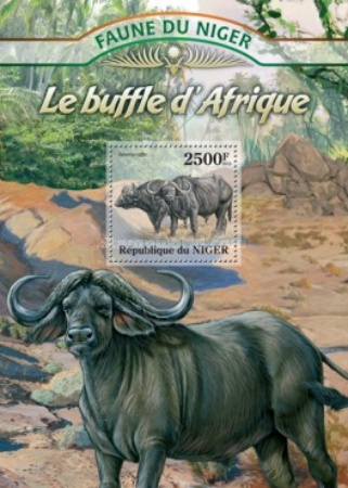[Fauna of Niger - Buffalo, Typ ]