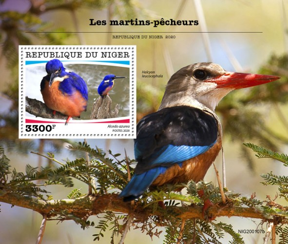 [Birds - Kingfishers, type ]