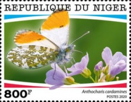 [Insects - Butterflies, type JGC]
