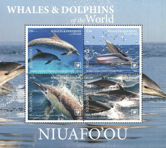 [Marine Life - Whales and Dolphins of the World - With White Frame, type ]