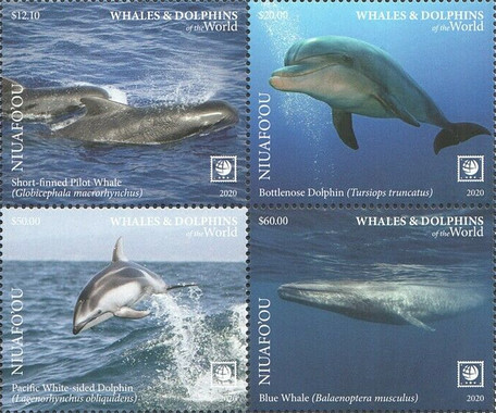 [Marine Life - Whales and Dolphins of the World - Without White Frame, type ]