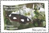 [Butterflies - White Background, type OW]