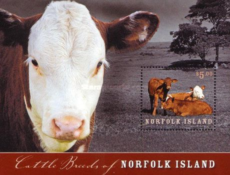 [Cattle Breeds of Norfolk Islands, Typ ]