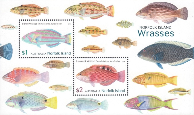 [Fish - Norfolk Island Wrasses, Typ ]