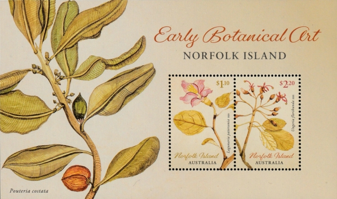 [Early Botanic Art, Typ ]