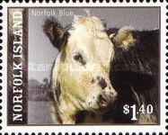 [Cattle Breeds of Norfolk Islands, Typ AKZ]