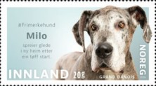 [Dogs, type BHC]