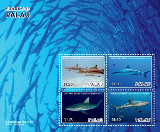 [Marine Life - Sharks of Palau, type ]