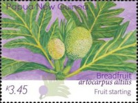 [Breadfruit - Artocarpus altilis, type CHK]