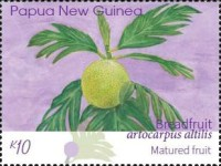 [Breadfruit - Artocarpus altilis, type CHL]