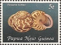 [Land Snail Shells, type ON]