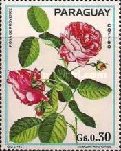 [Roses, Typ BCI]