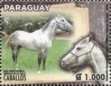 [Horse Breeds of Paraguay, type FJG]
