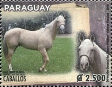 [Horse Breeds of Paraguay, type FJH]