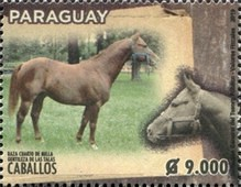 [Horse Breeds of Paraguay, type FJI]
