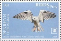 [Birds of Prey - White Frame, type AAD]