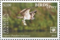 [Birds of Prey - White Frame, type AAF]