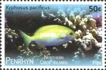 [Tropical Fish of the Pacific - With White Frame, type UV]
