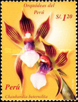 [Orchids, Typ AYU]