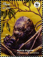 [Endangered Species - Giant Otter, Typ BBY]
