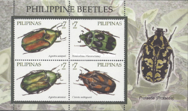 [Beetles, Typ ]