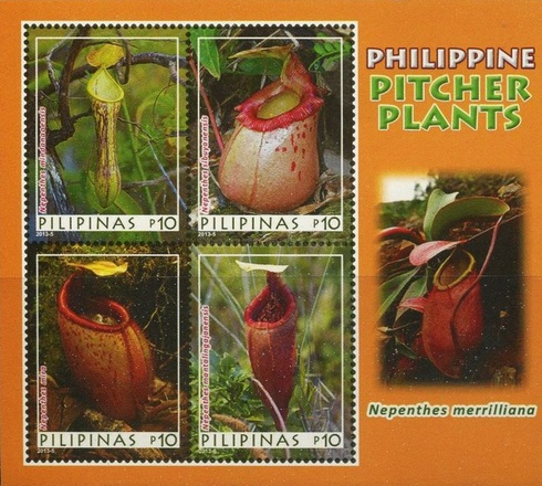 [Pitcher Plants of the Philippines, Typ ]