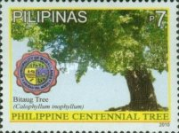 [Tourism - Oldest Tree in the Philippines, Typ IVP]