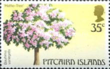 [Trees of Pitcairn Islands, type HZ]