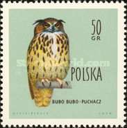 [Protected Birds of Poland, type AEN]