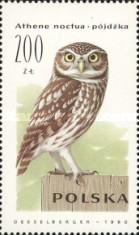 [Owls, type DDY]