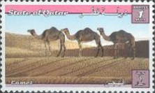 [Dromedary Camels, type AAC]