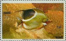 [Fish of the Arabian Gulf - Previous Issues Surcharged, type V3]