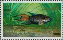 [Fish of the Arabian Gulf - Previous Issues Surcharged, Typ Y3]