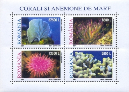 [Corals and Sea Anemones, type ]