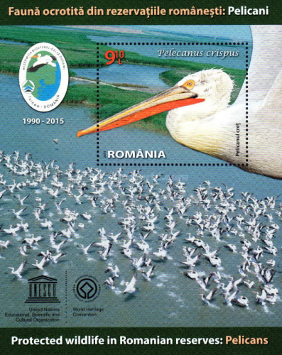 [Protected Wildlife in Romanian Reserves - Pelicans, type ]