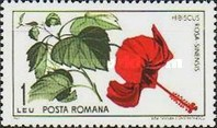 [The 45th Anniversary of the Founding of Cluj Botanical Garden, type CNT]