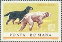 [Hunting Dogs, type CPV]