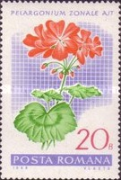 [Flowers - Geraniums, type CXY]