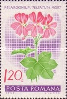 [Flowers - Geraniums, type CYC]