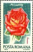 [Roses, type DFB]