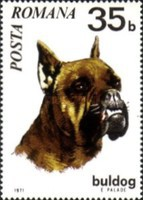 [Dogs, type DGN]