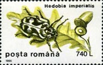 [Insects - Beetles, type HJY]