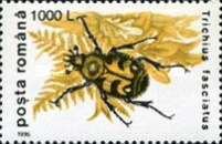 [Insects - Beetles, type HKA]