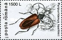 [Insects - Beetles, type HKB]