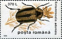 [Insects - Beetles, type HKW]