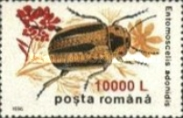 [Insects - Beetles Stamp of 1996 Surcharged, type HKW1]
