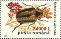 [Insects - Beetles Stamp of 1996 Surcharged, type HKW3]