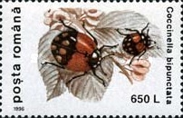 [Insects - Beetles, type HKX]