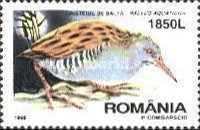 [Nocturnal Birds, type HQE]